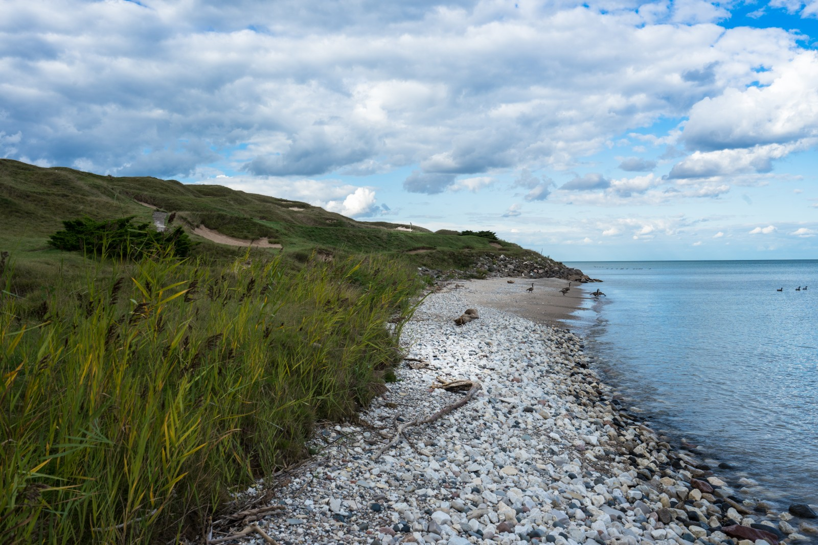 Whistling Straits Loch 7
