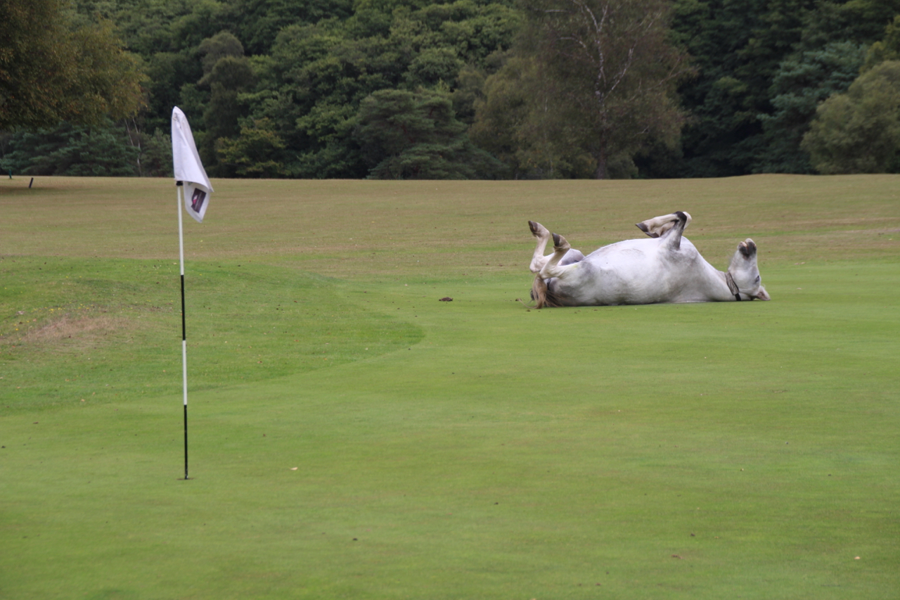 New Forest GC